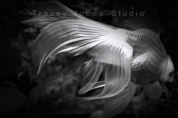 ...the goldfish 2.