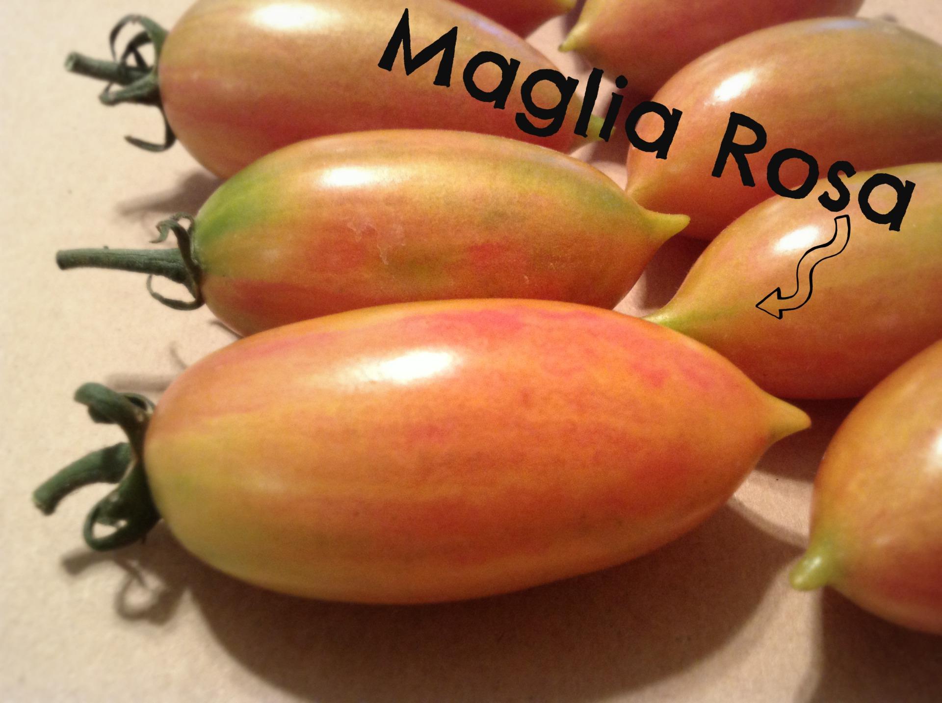 maglia rosa tomato