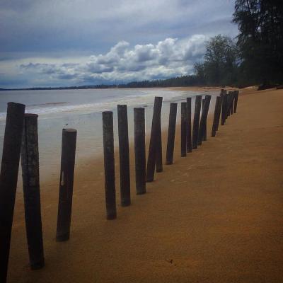 Palm trunks as beach posts
