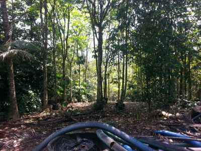 Mid range forest