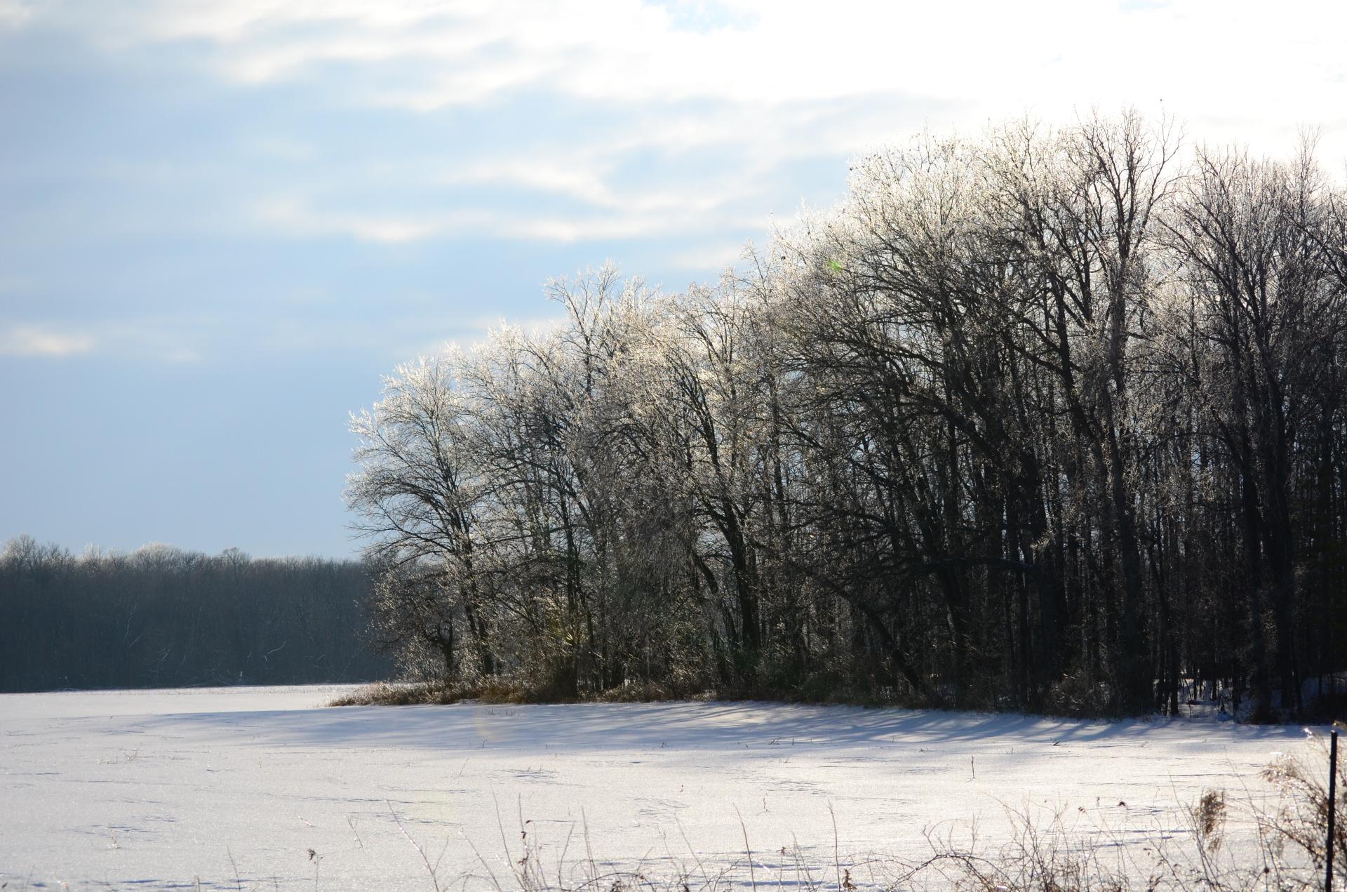 Frozen Treeline