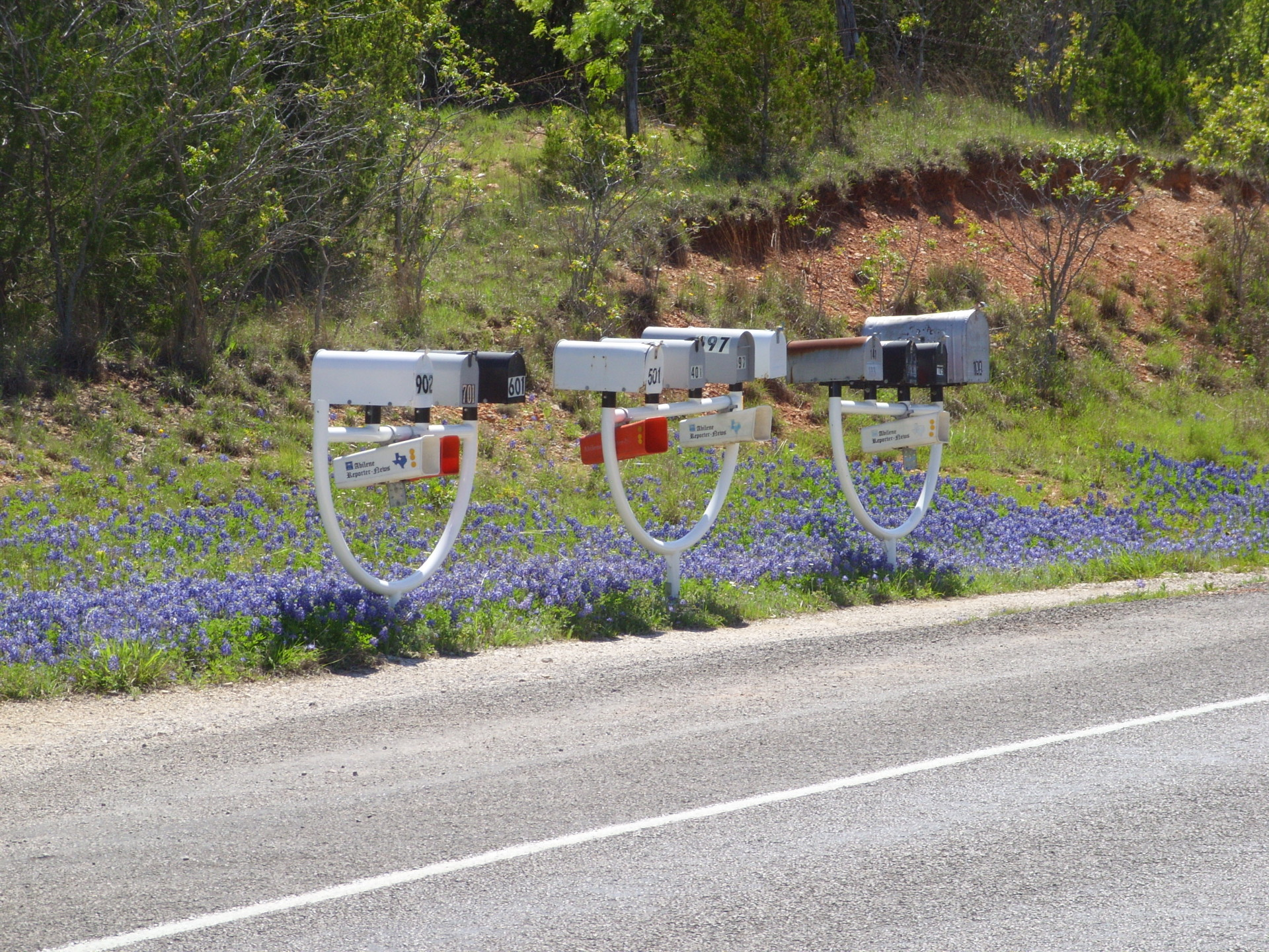 Bluebonnets and Mailboxes