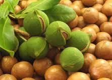 Hawaiian Foods Popcorn hawaiian host chocolate macadamia nut candy nuts