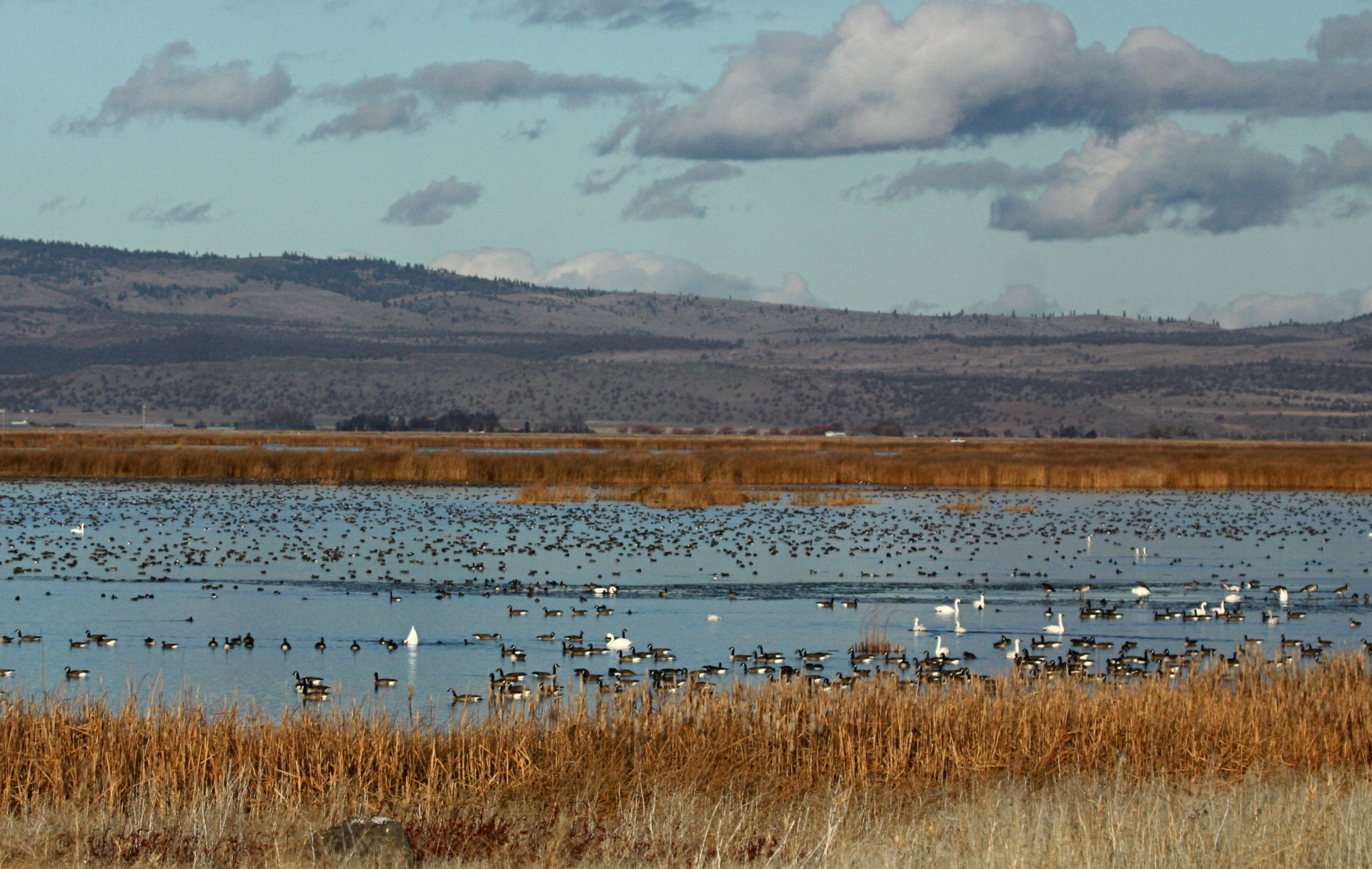 Tule Lake NWR in northern California is a waterfowl wonderland.