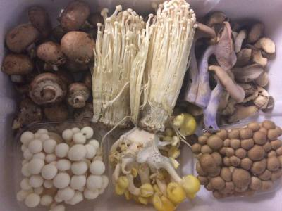 Fresh delivery of Wild Mushrooms from local sources!