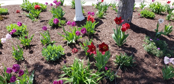 Spring Drug Free Reminder