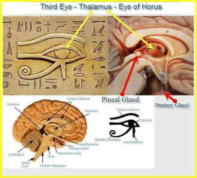 The Divine Math of the Eye of Heru/ Ra