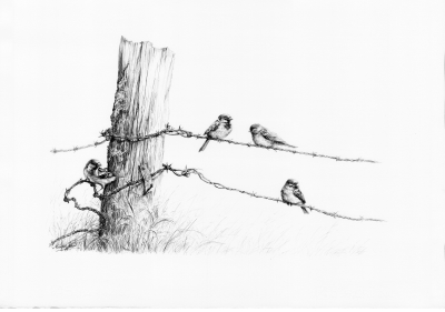 On the barbed wire