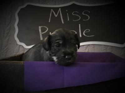 Miss Purple - Gretl - Thank you Beth!