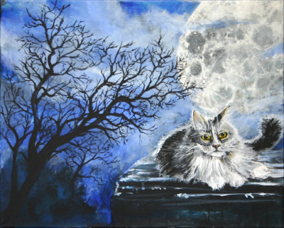 Cat at Night