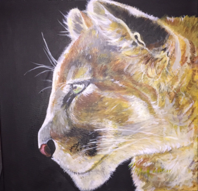 Cougar (Patience)