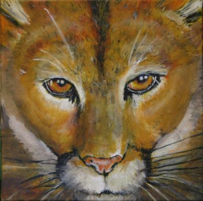 Mountain Lion Eyes