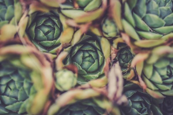Sucker for Succulents