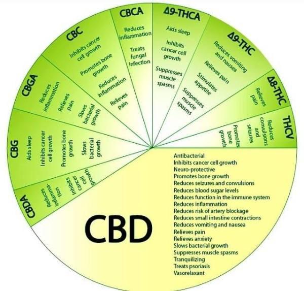 CBD Benefits Wheel