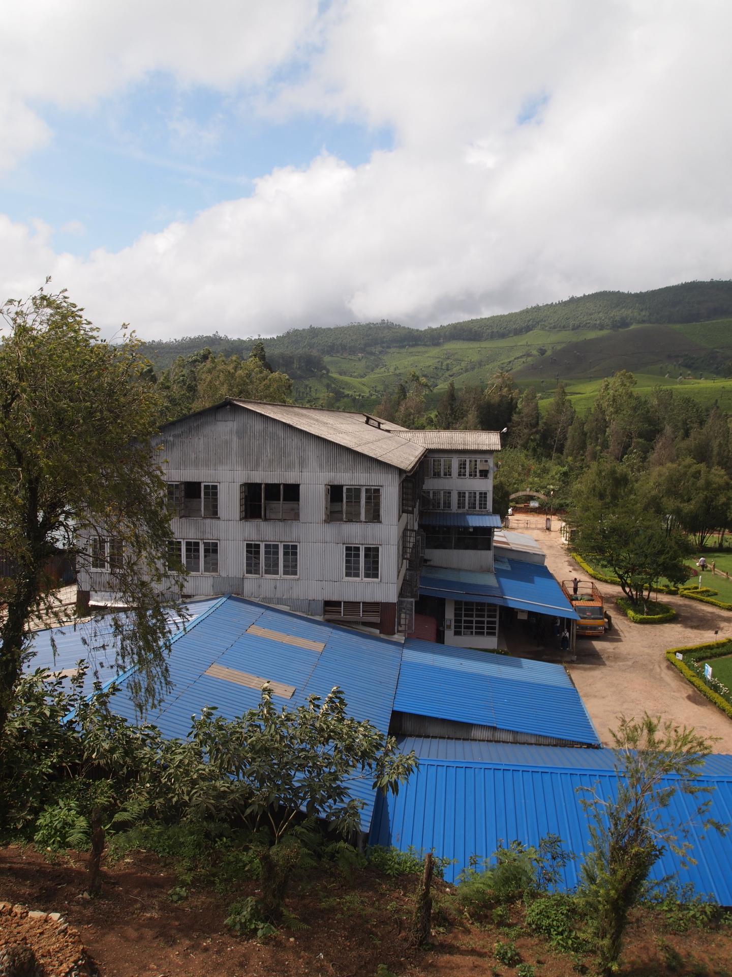 Tea plantations, aficionado, and working conditions