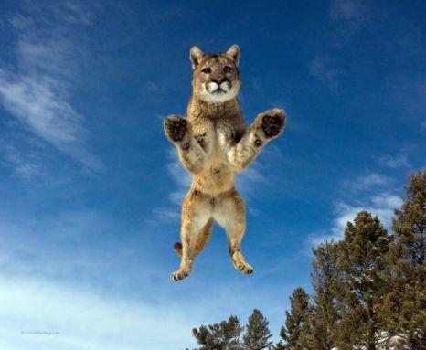 Huge Leap Cat