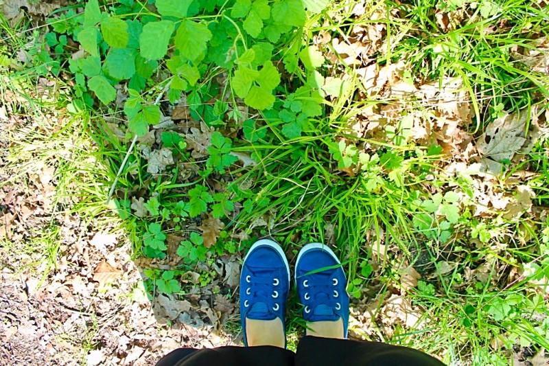 Baskets converse sur de l'herbe et de la verdure