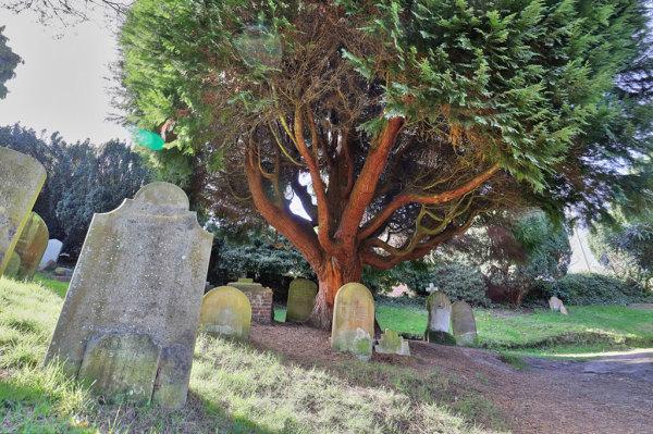 Woodbury Park Cemetery 16
