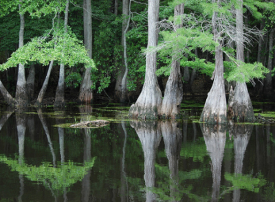 Interior Dept. reverses interpretation of 1956 Lumbee Act