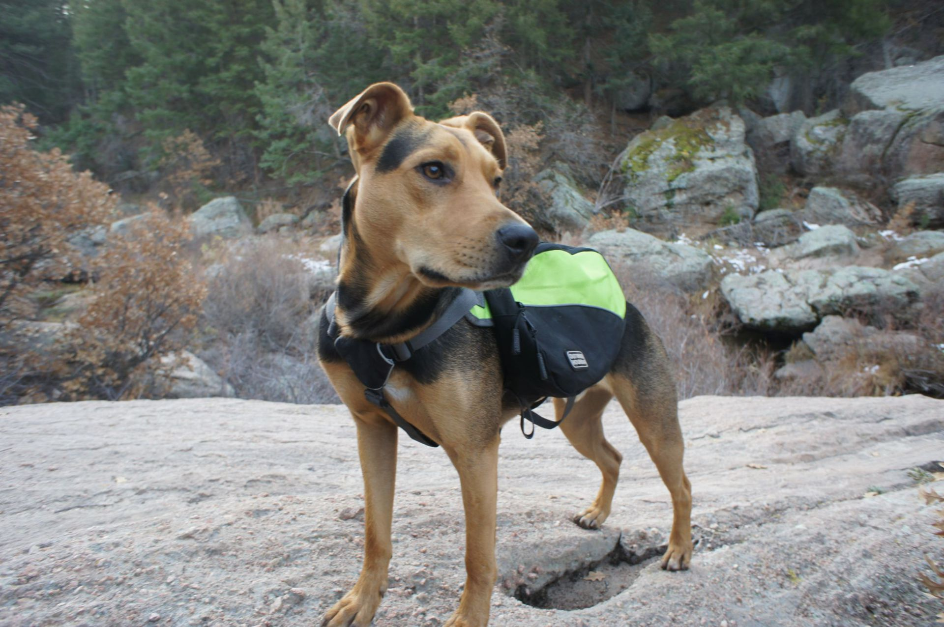 Dog backpack, Hiking, Dog B.O.B., Rucksack,camping,travel