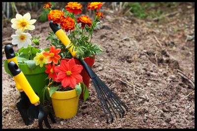 Garden & Yard work