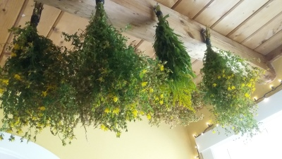St. John's Wort hung to dry