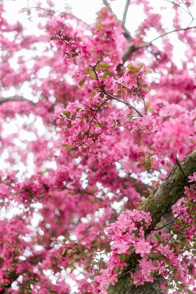 Cherry Blossom Season | LIFESTYLE