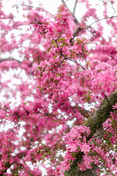 Cherry Blossom Season | LIFESTYLE