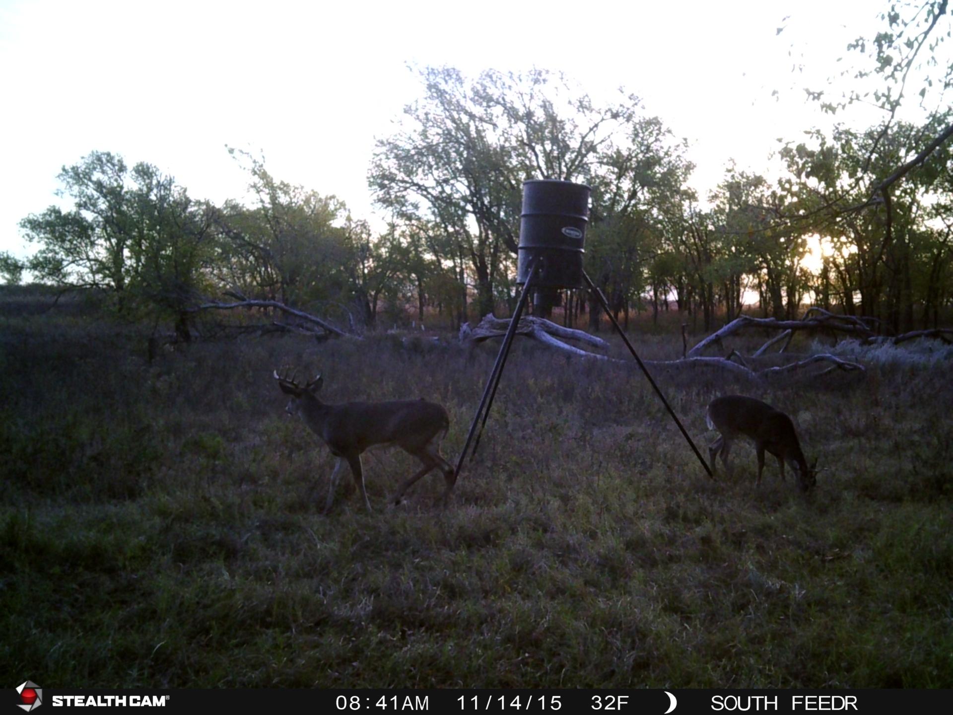 Management buck (left)