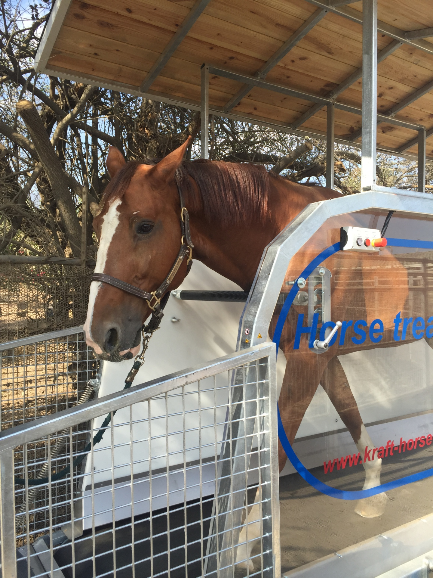 horse treadmill with roof