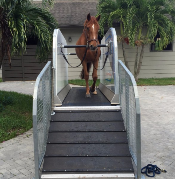 horse treadmill front view