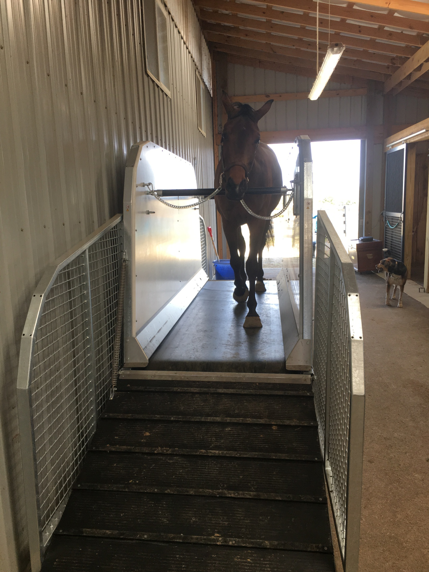 Horse Treadmill at Punchestown Stables, KY