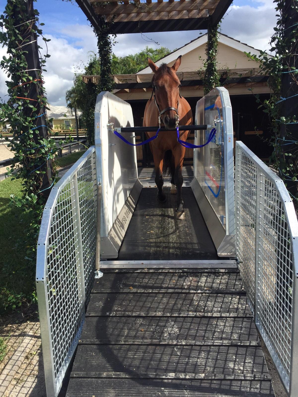 Horse Treadmill at Juan Ortiz Stable, FL