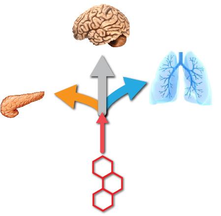 Tissue-Targeted Therapeutics