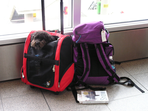My canine side-kick and my carry-on in Amsterdam, annmariemershon.com