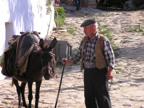 A Selçuk gentleman urges his burrow to town. annmariemershon.com