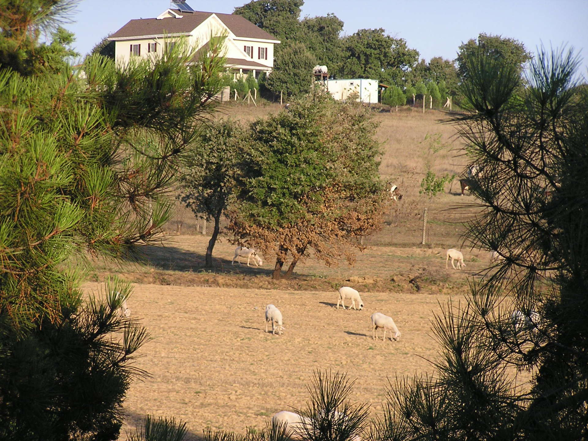 My apartment resounded with sheep bells from this pasture. Istanbul, Turkey: annmariemershon.com