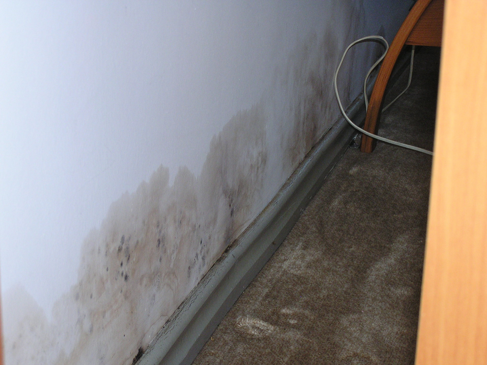 I was appalled to discover moldy walls in my lojman at Koç. Istanbul, Turkey: chapter 39, You must only to love them. http://mershon.wordpress.com