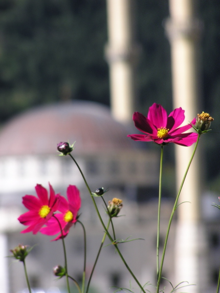 Uzungül's picturesque mosque on the lake, a poppy's perspective. Trabzon, Turkey, chap 43, You must only to love them. http://mershon.wordpress.com