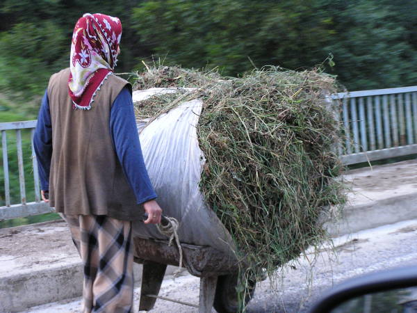 It seemed the women in northern Turkey did all the heavy work. Trabzon, Turkey, chap 43, You must only to love them. http://mershon.wordpress.com