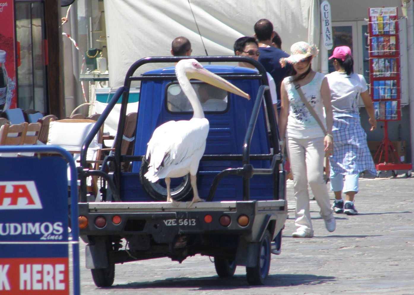 Pelicans are common on Mykenos, and this one hitchiked through town. Mykenos, Greece: Chapter 61, You must only to love them. http://mershon.wordpress.com