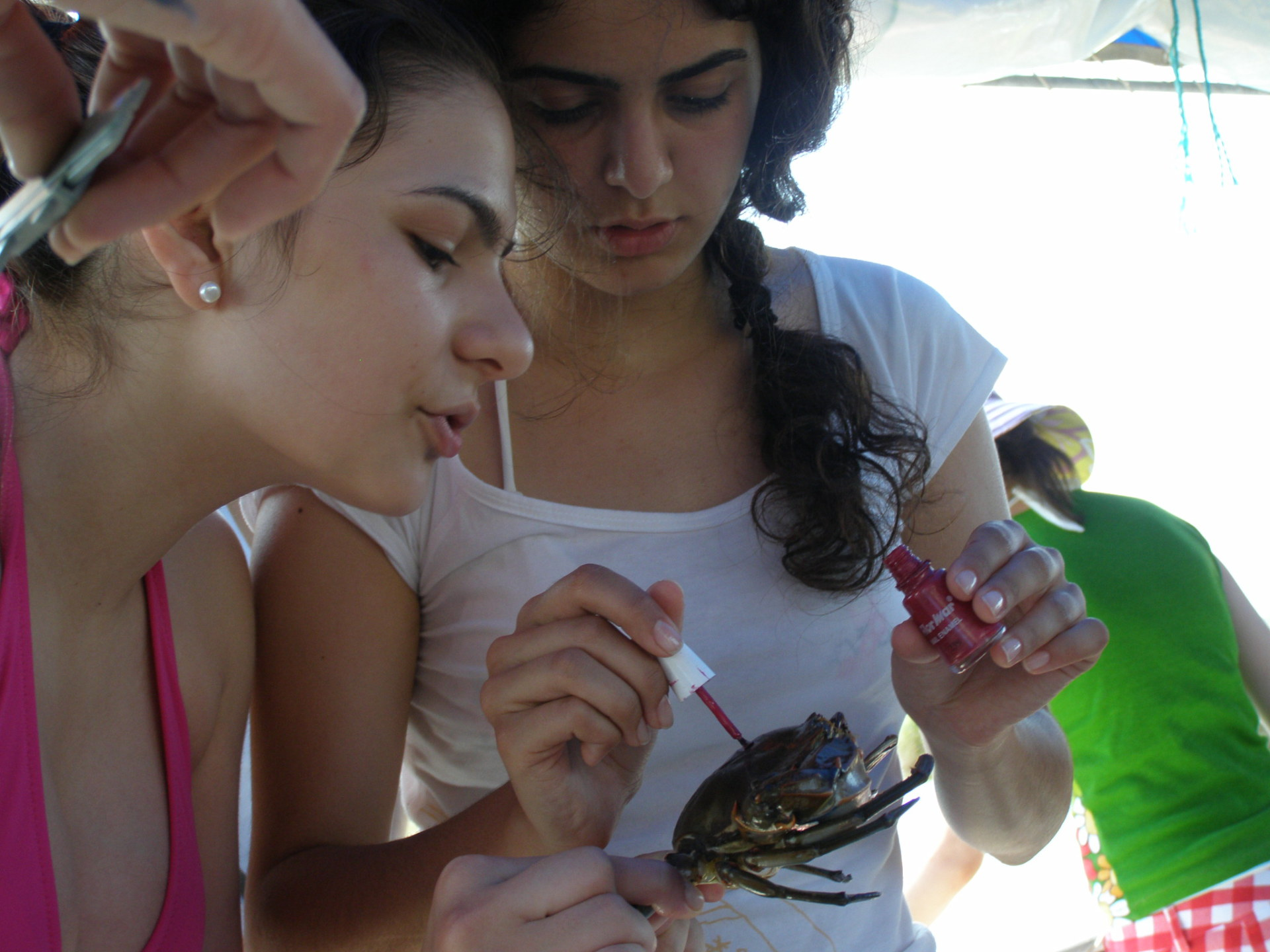 Each crab from the first catch was marked with an x in fingernail polish.. Dalyan, Turkey: chapter 67, You must only to love them. http://mershon.wordpress.com