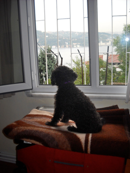 Miss Libby supervised comings ang goings from her perch in the bedroom window. Istanbul, Turkey: chapter 70, You must only to love them. http://mershon.wordpress.com