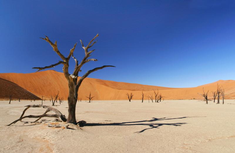 pregão deserto