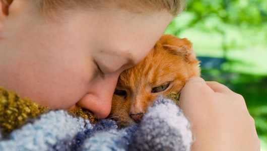 Come Cuddle Cats
