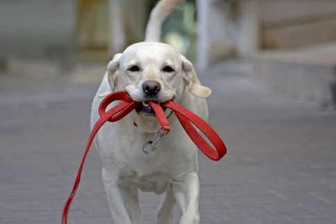 Become a Dog Walker