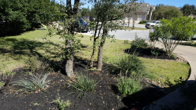 TREE & SHRUB TRIM AND REMOVAL