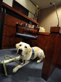 Canines Used in the Courtroom