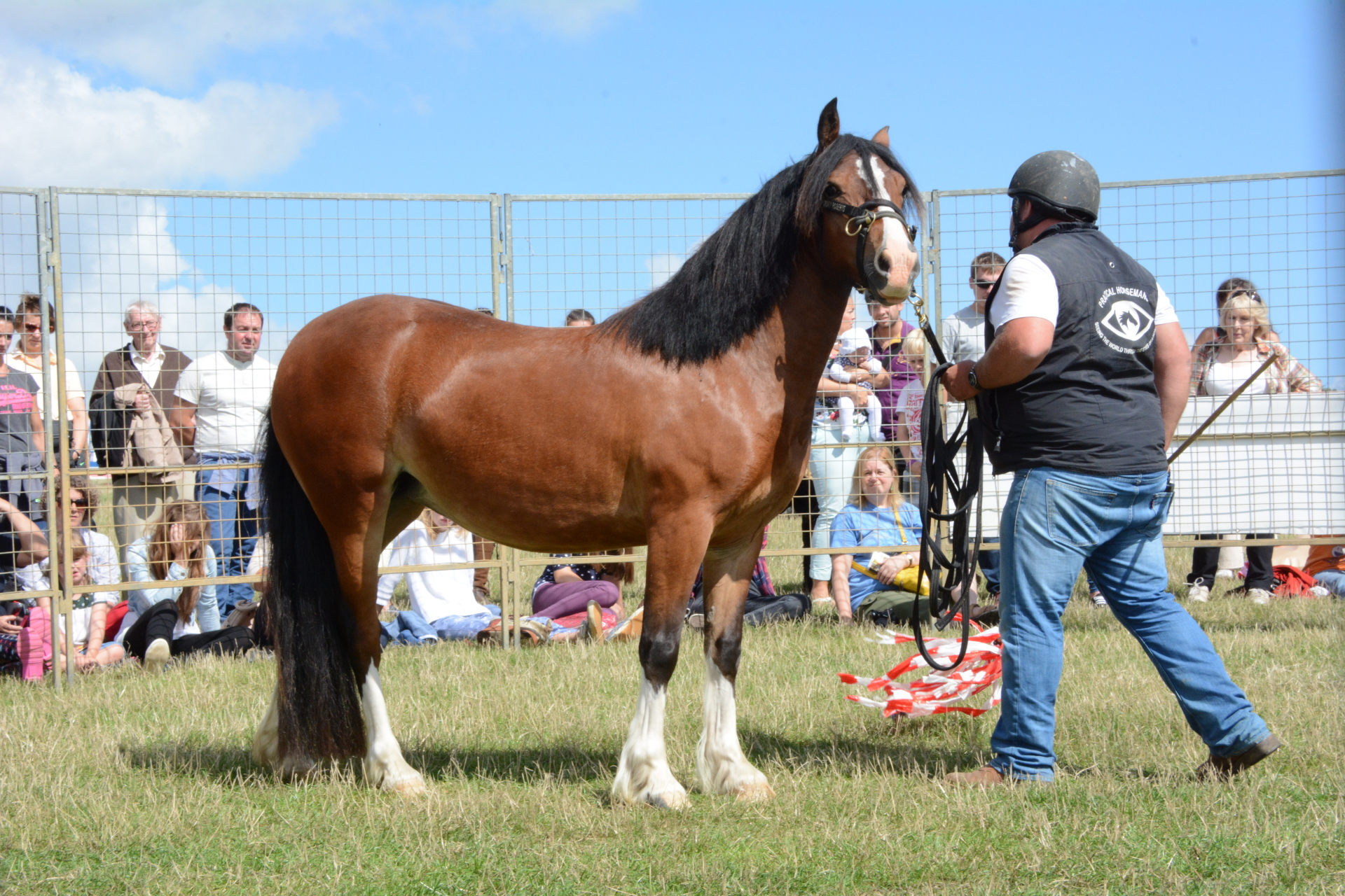 Practical Horsemanship