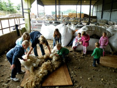 'Live' Shearing